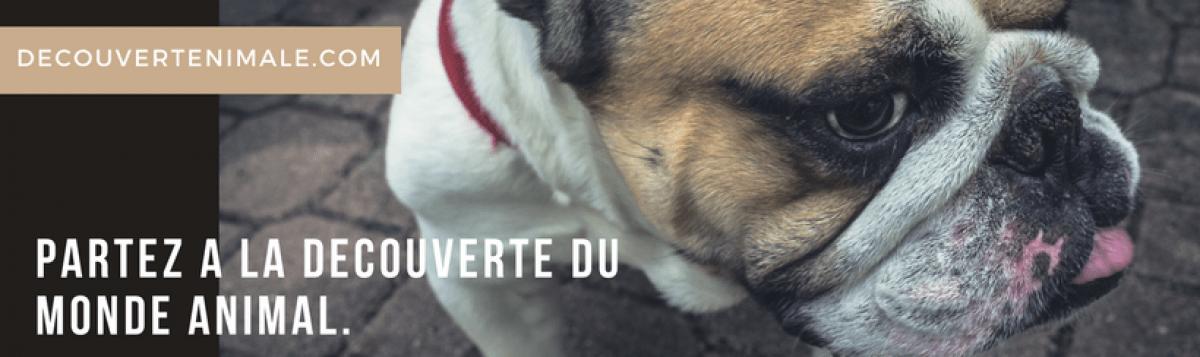 decouverteanimale.com animalerie en ligne